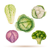 Set of watercolor vegetables. Royalty Free Stock Photo