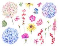 Set of watercolor vintage floral design elements of blooming hyd vector illustration