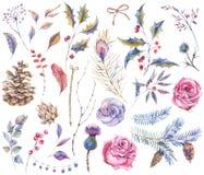 Set of watercolor vintage natural elements stock illustration
