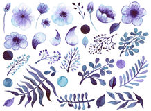 Set Of Watercolor Violet Flowers, Leaves And Elements Royalty Free Stock Photography