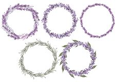 Set of 5 watercolor wreath lavender flowers on white background. royalty free illustration