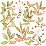 Set of watercolors leaf . Elements for your design. Leaves theme Royalty Free Stock Photography