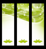 Set wavy nature banners with green leaves Royalty Free Stock Photo