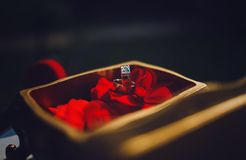 Set of wedding rings. In box near red rose Royalty Free Stock Photo