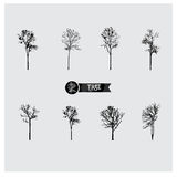 Set wektorowe drzewne sylwetki Obrazy Stock
