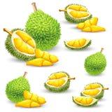 Set wektorowe ilustracje, ikony durian owoc ilustracji