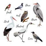 Set wektorowe ptasie ikony Zdjęcia Royalty Free