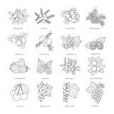Set wektorowego konturu doodle pied jagody odizolowywać na bielu ilustracji