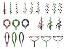 Set wektorowi różni typ kwiatostan. Royalty Ilustracja
