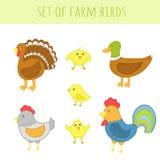 Set wektoru gospodarstwa rolnego ptaki Zdjęcie Royalty Free
