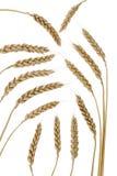 Set wheat Royalty Free Stock Photos