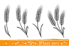 Set of wheat ears Royalty Free Stock Images