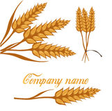 Set of wheat, fields logo design template, harvest, grain, bakery, healthy food. Royalty Free Stock Image