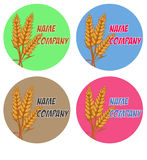 Set of wheat, fields logo design template, harvest, grain, bakery, healthy food. Stock Photo