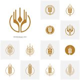 Set of Wheat Luxury Grain and bread labels. Nature wheat. Agriculture wheat Logo Template Vector.  vector illustration