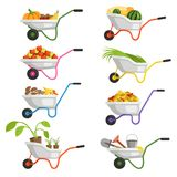 Set of wheelbarrows with different fruits and vegetables. Farm garden apple, vector farming harvest illustration Royalty Free Stock Image