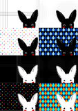 Set White and Black Rabbit Background Stock Photo