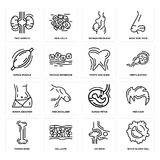 Set of White blood cell, Hip Bone, Human Fetus, Abdomen, Tooth and Gums, Muscle, Woman Pregnant, Two Kidneys icons. Set Of 16 simple  icons such as White blood Royalty Free Stock Photo