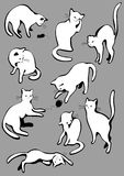 Set of white cats. Royalty Free Stock Images