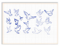 Set of white  doves. Concept of love or peace. Set of white  doves Stock Photos