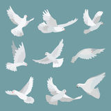Set white doves peace isolated on background. Bird illustration. Set white doves peace isolated on background. Graphic illustration bird stock illustration