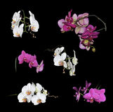 Set of white and purple orchids flowers Royalty Free Stock Photos