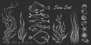 Set of white sea fish, seaweed, seashell. Perch, cod, mackerel, flounder, saira.   Stock Images