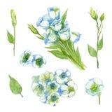 Set of White Singl Lisianthus and Lisianthus buds on a white background. stock illustration