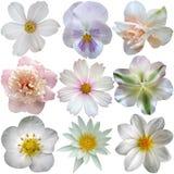 Set of white spring  flowers. On white Royalty Free Stock Image