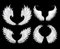 Set of white wings. On a black background Stock Images
