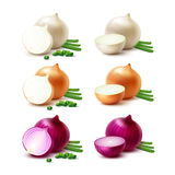 Set of White Yellow Red Onion Bulbs Isolated Stock Photo