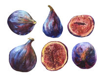 Set whole fresh figs and figs sliced in half, showing the red pulp and seeds inside. Watercolor hand painting illustration on isolate white background Royalty Free Stock Image