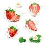 set of whole and half strawberries with flowers, leaves and cream, milk or yogurt splash. vector illustration