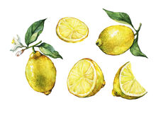 Set with whole and slice fresh citrus fruit lemon with green leaves and flowers. royalty free illustration