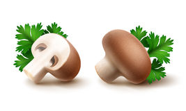 Set of Whole and Sliced Half Brown Portabello Agaricus Champignons with Green Parsley Leaves on White Background Royalty Free Stock Photography