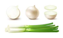 Set of Whole and Sliced Onion Bulbs with Green Onions stock illustration