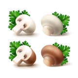 Set of Whole and Sliced White Mushrooms with Parsley Leaves Royalty Free Stock Photos