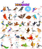 Set of wide variety of wild birds Royalty Free Stock Photos