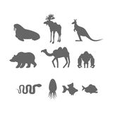 Set Wild animal silhouette. Animals from Zoo and fishes. Set Wild animal silhouette.  Animals from Zoo and fishes Royalty Free Stock Images