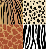 Set of wild animals skin. Set of giraffe, cheetah, tiger and zebra skins Stock Image