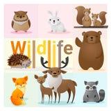 Set of Wild animals Stock Photos