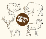 Set of wild artiodactyls animals contour vector il. Contour vector illustration of a set of wild artiodactyls animals: boar, bison, deer and mountain sheep royalty free illustration