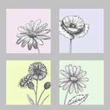 Set of wild, black and white field flowers - poppy, chamomile, cornflower, daisy, sketch vector illustration. Set of wild, black and white field flowers - poppy Stock Image