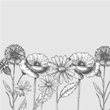Set of wild, black and white field flowers - poppy, chamomile, cornflower, daisy, sketch vector illustration. Set of wild, black and white field flowers - poppy Royalty Free Stock Image