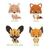 Set of wild canine species. Set of wild canine animal species stock illustration
