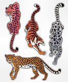 Set of wild Cat flash tattoo patches or elements. Set of wild Cat designs. Classic flash tattoo style patches or elements. Traditional stickers, comic pins. Pop Royalty Free Stock Image