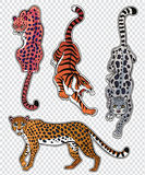 Set of wild Cat flash tattoo patches or elements. Set of wild Cat designs. Classic flash tattoo style patches or elements. Traditional stickers, comic pins. Pop Stock Photos