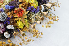 Set of wild dried flowers Royalty Free Stock Photo