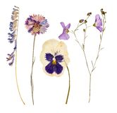 Set of wild dry pressed flowers and leaves Stock Photos