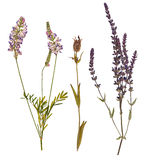 Set of wild dry pressed flowers and leaves Stock Photography